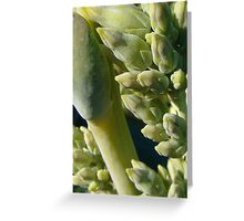 Succulant Lollypop Greeting Card