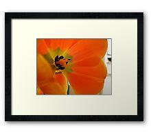 Flower Guts Framed Print