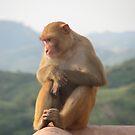 Monkey #1 by HelenBanham
