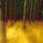 Forest by Jean-François Dupuis