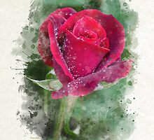 Red Rose Watercolor Art by Christina Rollo