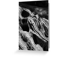 Power of the Olive Tree Greeting Card