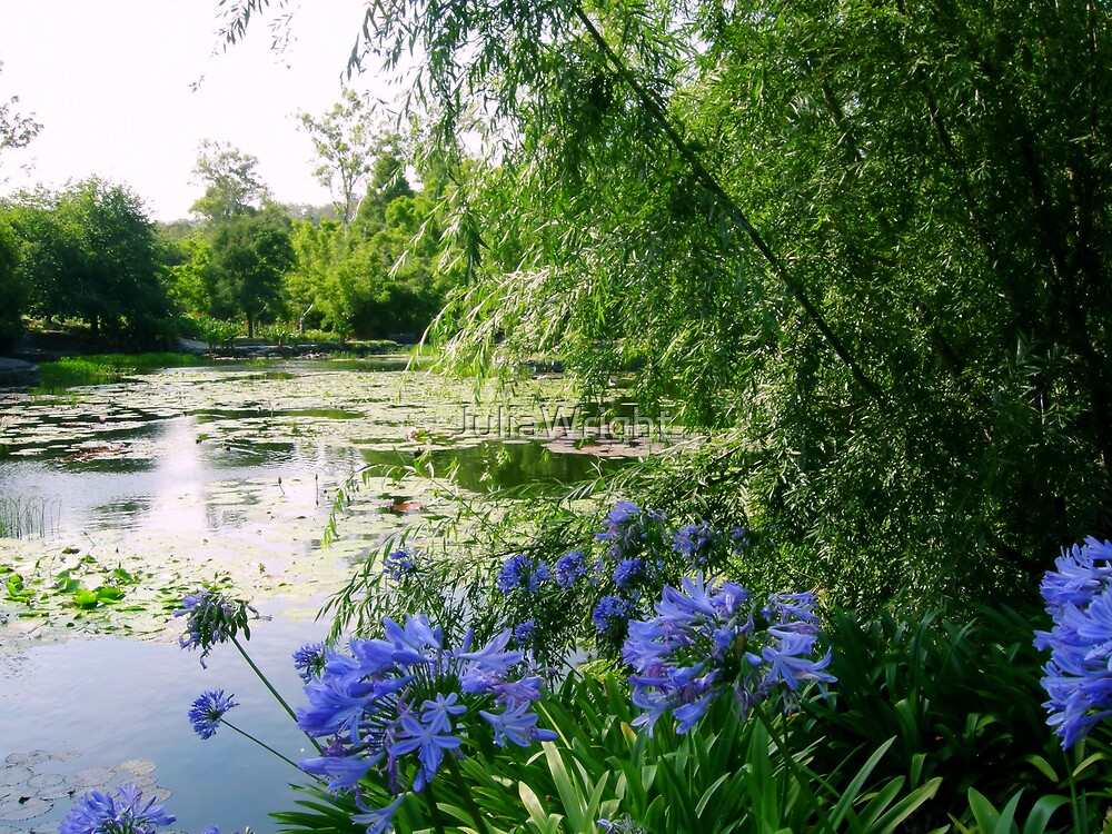 Sunlight on Pond by JuliaWright