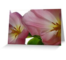 Fading Pink Tulips Greeting Card