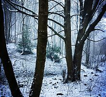 The Woods In Winter by farmerfarthing