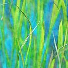 Underwater by Anne Staub