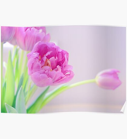 Pretty Pale Tulips Poster