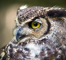 Great Horned Owl by LarryGambon