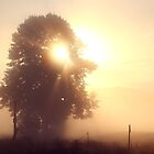 Misty Morning Magic by Peggy  Zinn