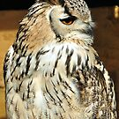 Eagle Owl by Russell Couch