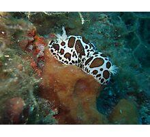Dalmatian nudibranchs Photographic Print