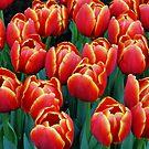 Vibrant Tulips by Jo Nijenhuis