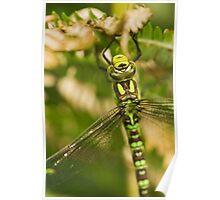 Dragonfly Head Macro Poster