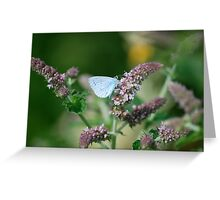 Holly Blue 2 Greeting Card
