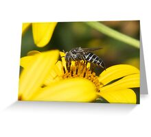 Insect.. Greeting Card