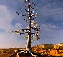 Sunrise over Bryce Canyon .3 by Alex Preiss