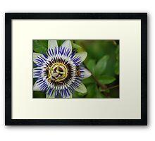 Garden Shots Framed Print