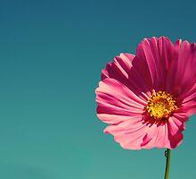 Poppy by Karina Kaiser