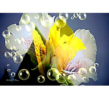 Mix of Beauty Photographic Print