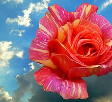 ROSE IN THE SKY by terezadelpilar~ art & architecture