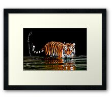 THE FLICK OF A TIGER'S TAIL Framed Print