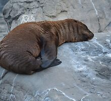 Brownie Sea Lion Photographic Print by DesignsByNee