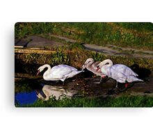 Last lessons for Signet. Canvas Print