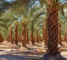 Palm Tree Forest by jswolfphoto