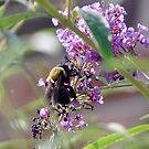 Beeyootiful by Lolabud