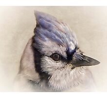 Portrait Of A Blue Jay Photographic Print