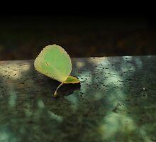Leaf by adamwitt