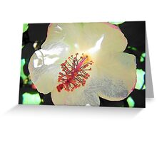 Pale Beauty Greeting Card