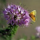 Morning Butterfly by David  Postgate