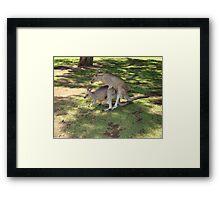 18+ Kangaroos Framed Print