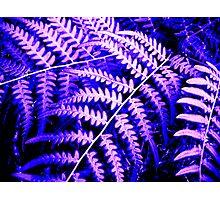 Purple Fern Photographic Print