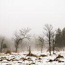 Foggy Swamp by AbigailJoy