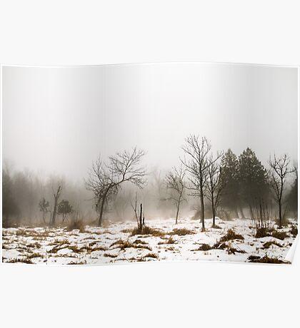 Foggy Swamp Poster