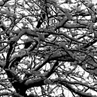Snow in the branches by Thad Zajdowicz