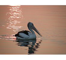 "Pelican ""Bush fire sunset"" Photographic Print"