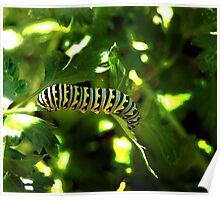 Caterpillar Munchies Poster