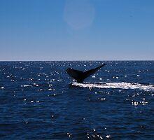 Whale Tale by Emily Earnshaw