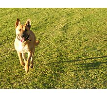 Walkies Photographic Print