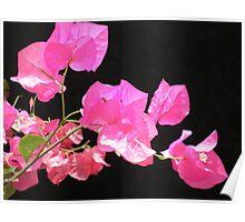 Japanese Paper Flower Poster