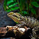 Frilled Lizard by Scott Ward
