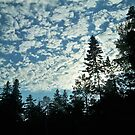 Minnesota Clouds & Pines  by Diane Trummer Sullivan