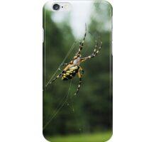Golden Orb/Garden Spider on Web iPhone Case/Skin