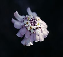 Delicate Floral Bouquet in Mauve & White by Marilyn Harris