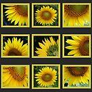 Sunflowers Calendar 2010 by Virginia N. Fred