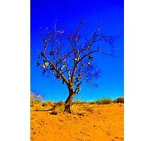 Boot Tree Photographic Print