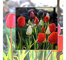 Double Tulips Photographic Print